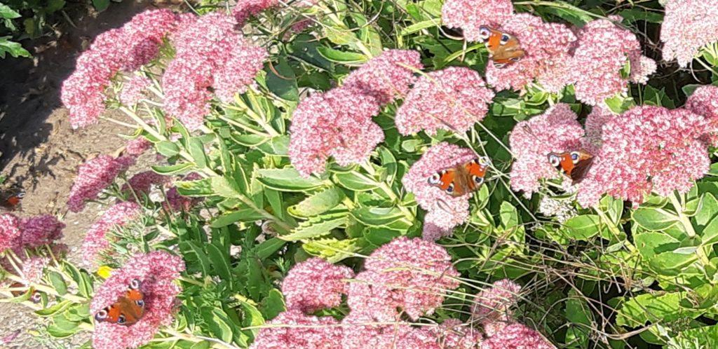 bloemen met een vlinder